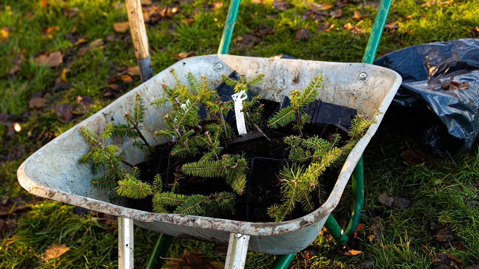 Ecosia trees are going in the ground near NHS hospitals across the UK