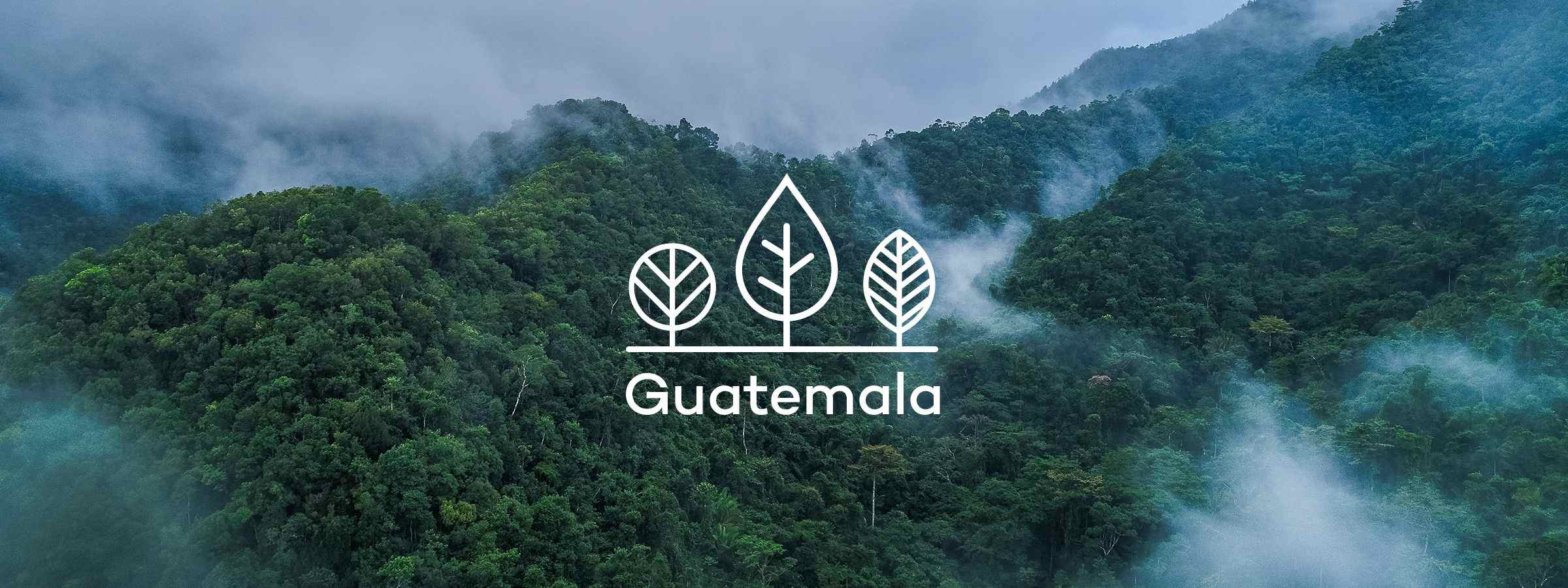 Your trees in Guatemala