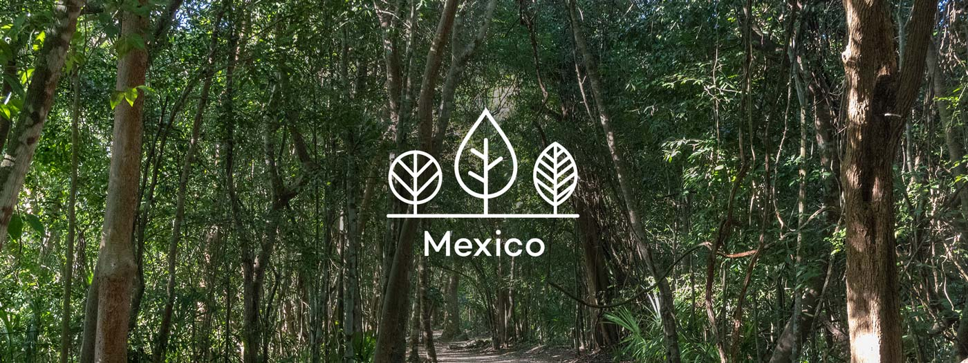 Your trees in Mexico