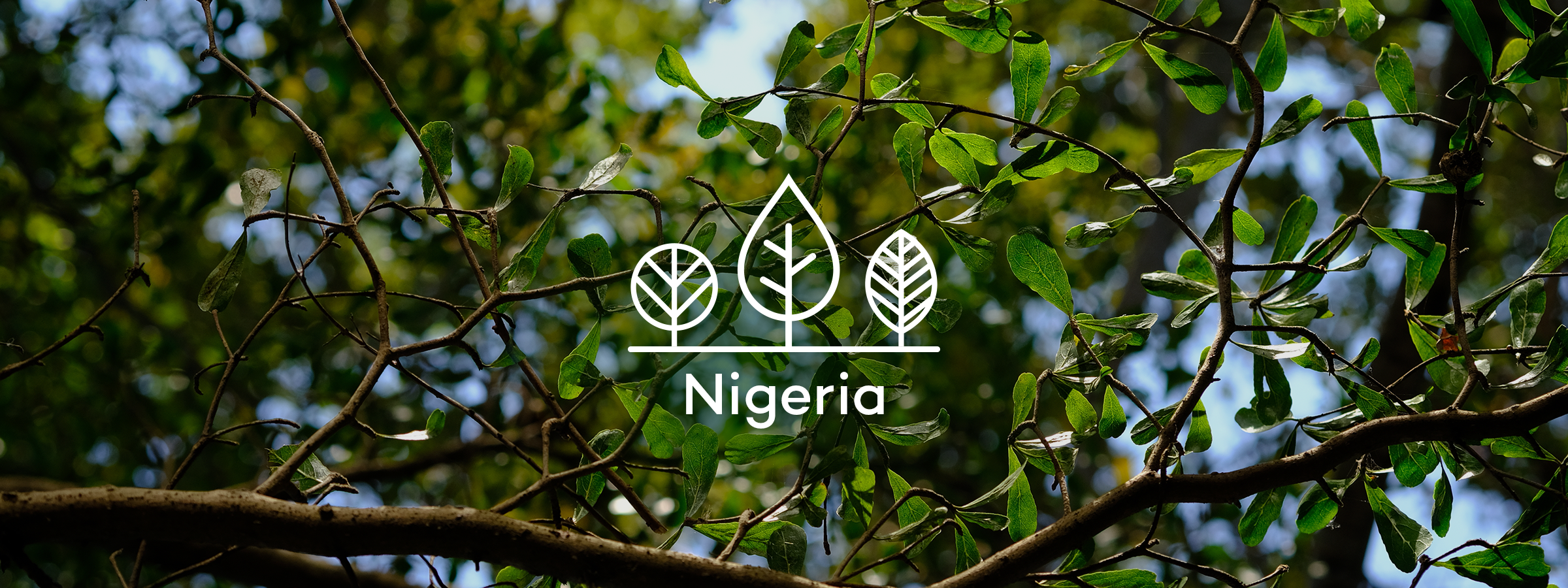 Your trees in Nigeria