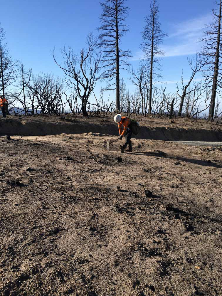 Join the #EcosiaWildfireRelief to fight fires and restore forests!