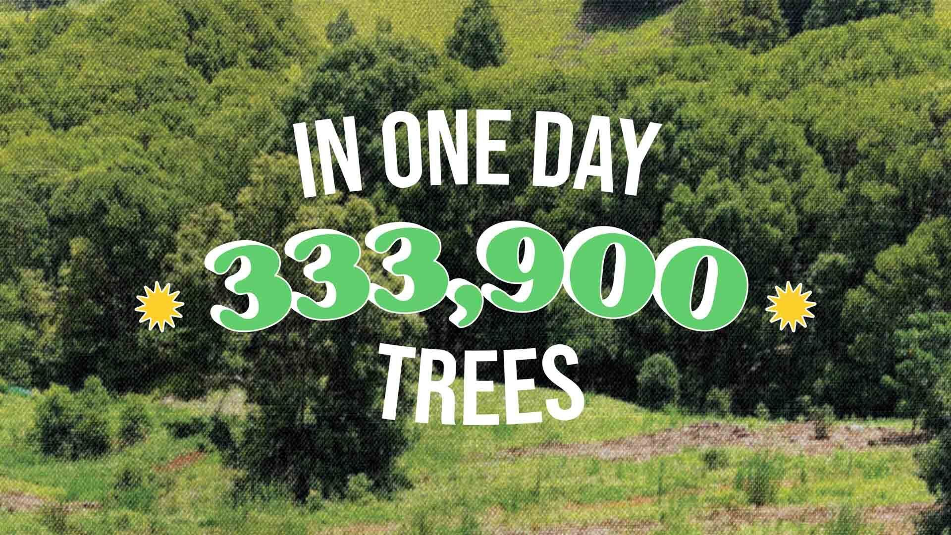 Thank you for fighting wildfires and restoring burnt forests!