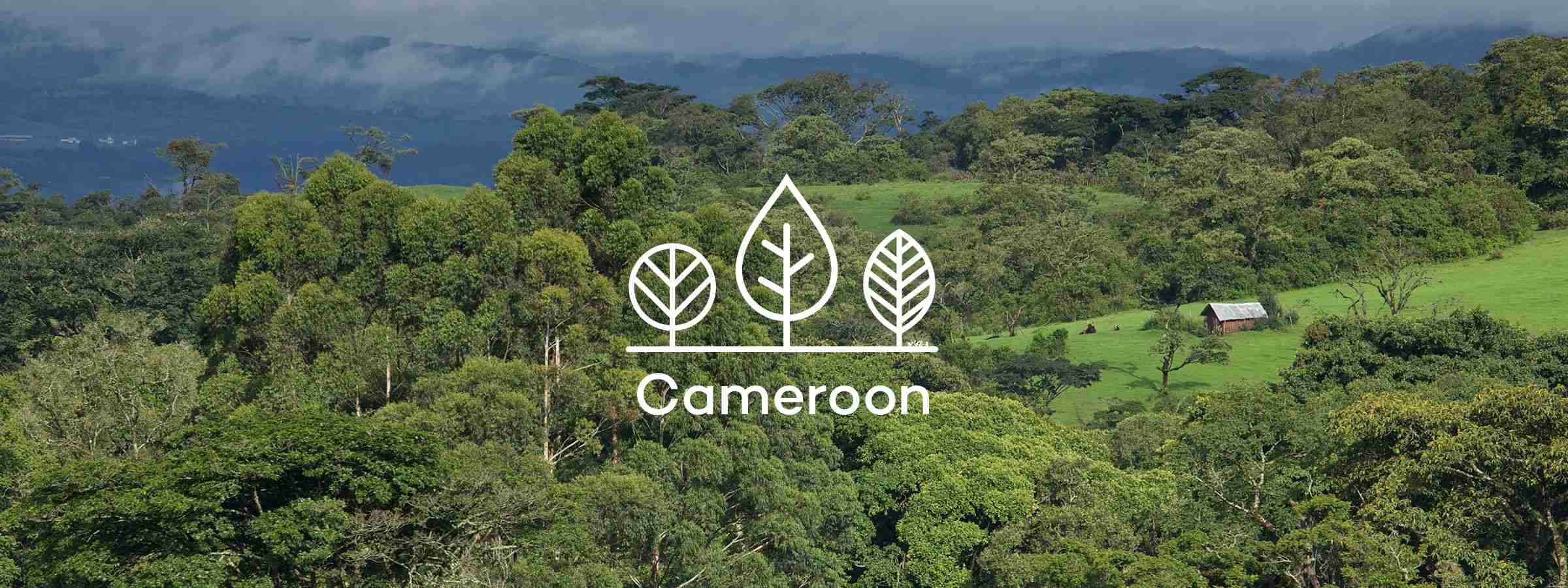 Your trees in Cameroon